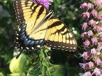 (Flower Gallery) Plants to attract Beneficials