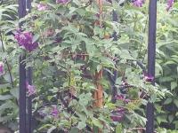 (Flower Gallery) Think Vertical