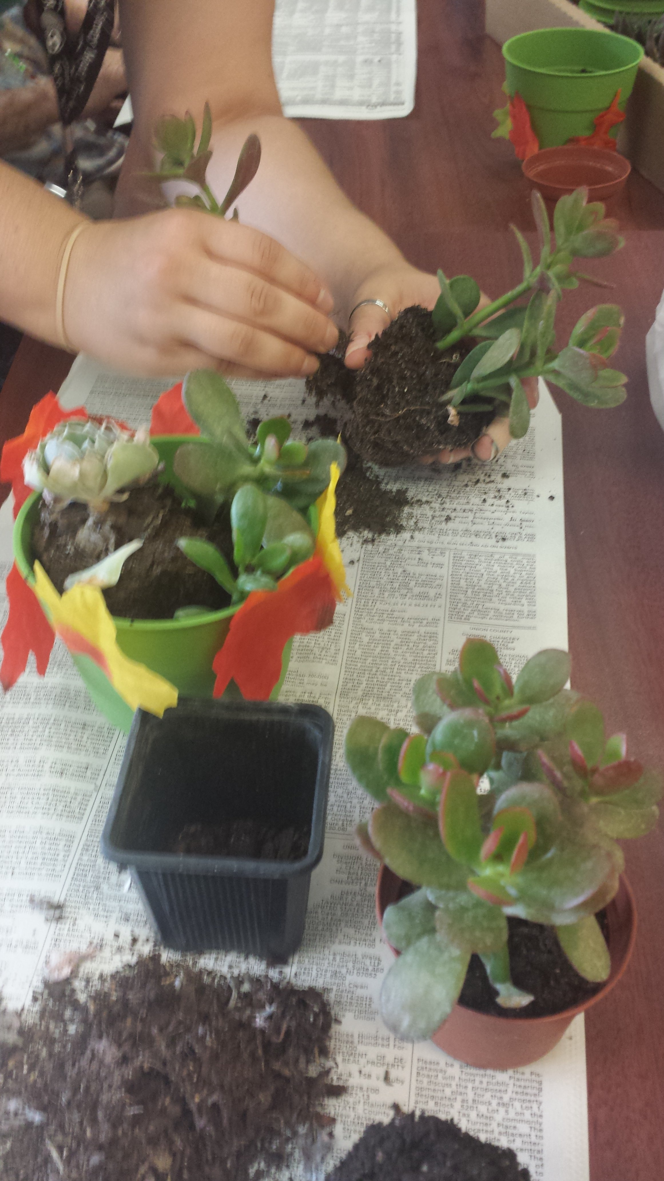 """5-Gallery """"Horticultural Therapy"""""""