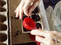 Lorraine HT Session 245 Planting Basil Seeds