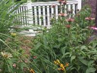 Plants that Provide Movement in the Plantscape1