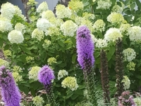 Plantscaping-4-7-26-16