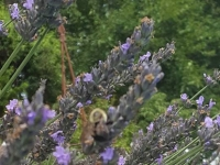 Plantscaping-7-7-26-16