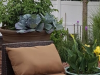 Plantscaping Gallery 5