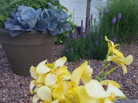 Plantscaping Gallery Colorful Hues