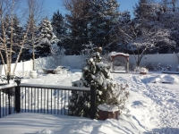 Winter Photo 3